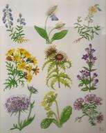 Flowers of the Downlands Medici print of watercolour painting