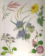 Flowers of the Seaside Medici print of watercolour painting