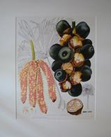 Print of Borassodendron machadonis watercolour painting