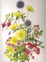 Globe Thistle, Daisies, Rose and Fuchsia Medici print of watercolour painting