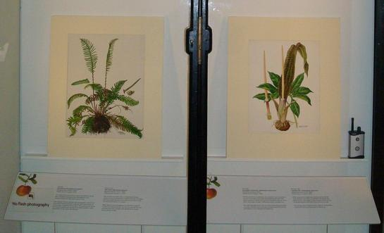 Barbara Everard watercolour paintings on show at the Natural History Museum, London